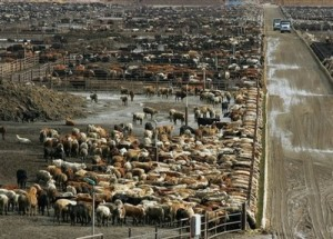 Food Prices Beef